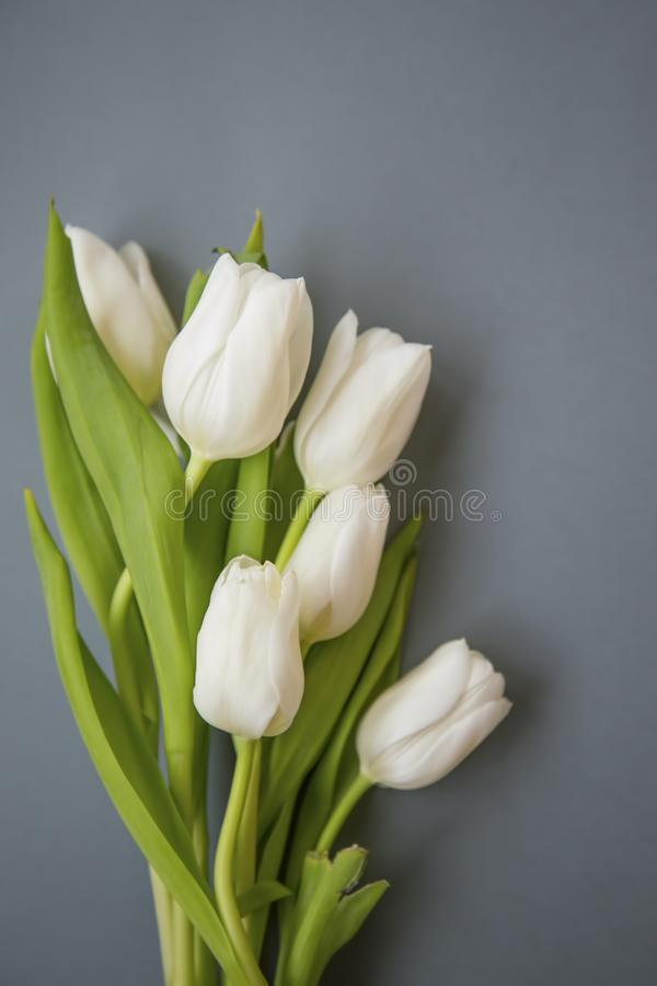 White tulips bouquet spring flowers on grey background still life royalty free stock photo