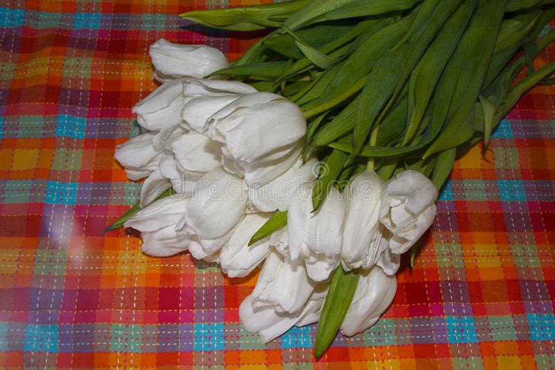 White tulips on a checkered tablecloth stock photos