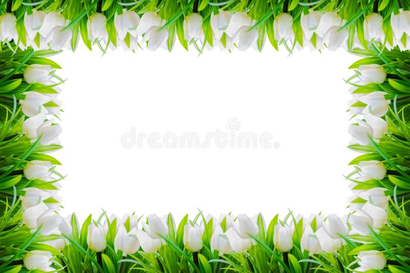 White Tulips Flower Border Frame Stock Photo - Image of ...
