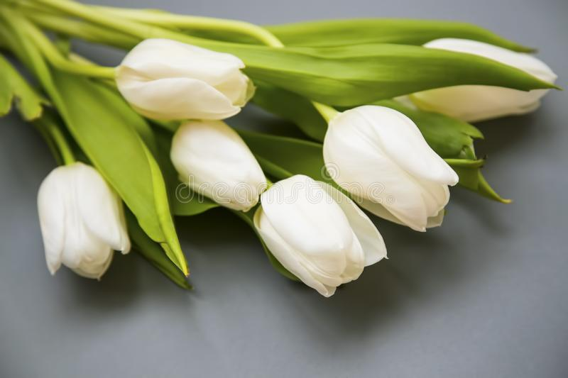 White tulips flowers bouquet on grey background, spring beautiful flowers bouquet royalty free stock photos
