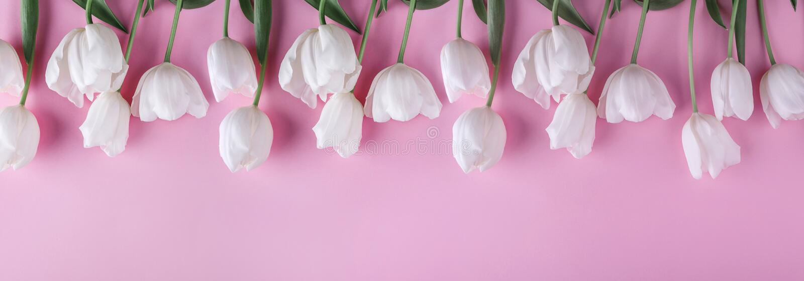 White tulips flowers over light pink background. Greeting card or wedding invitation. stock photography