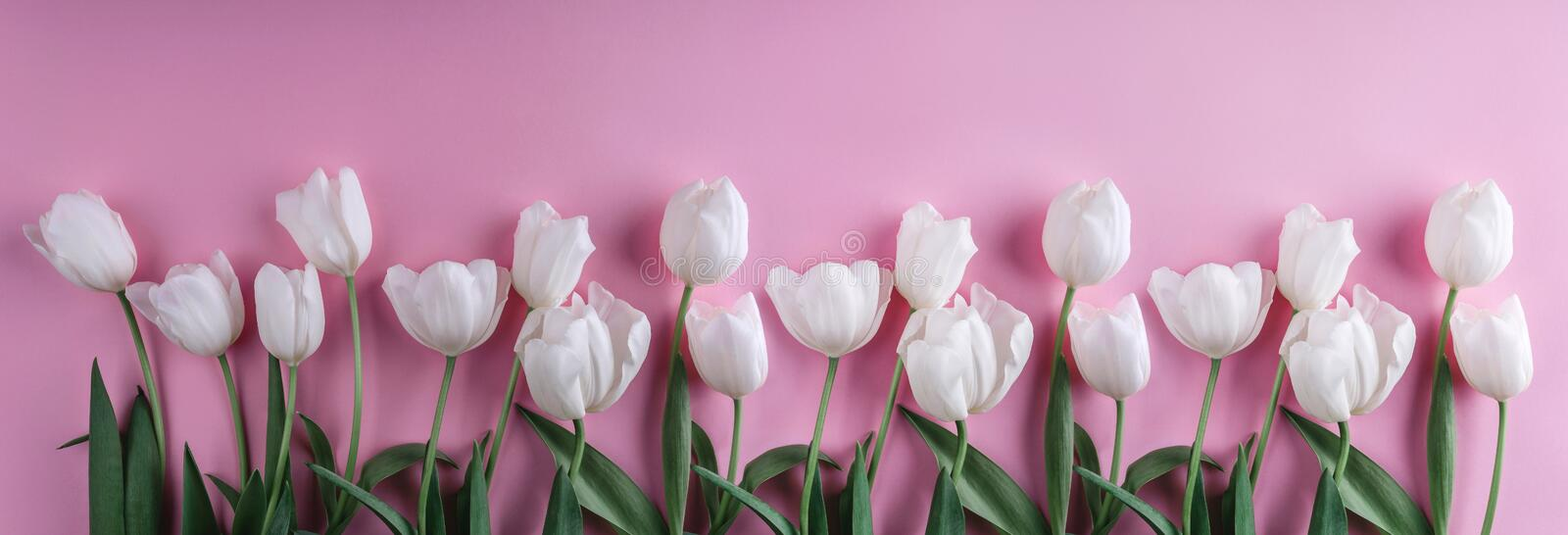 White tulips flowers over light pink background. Greeting card or wedding invitation stock images