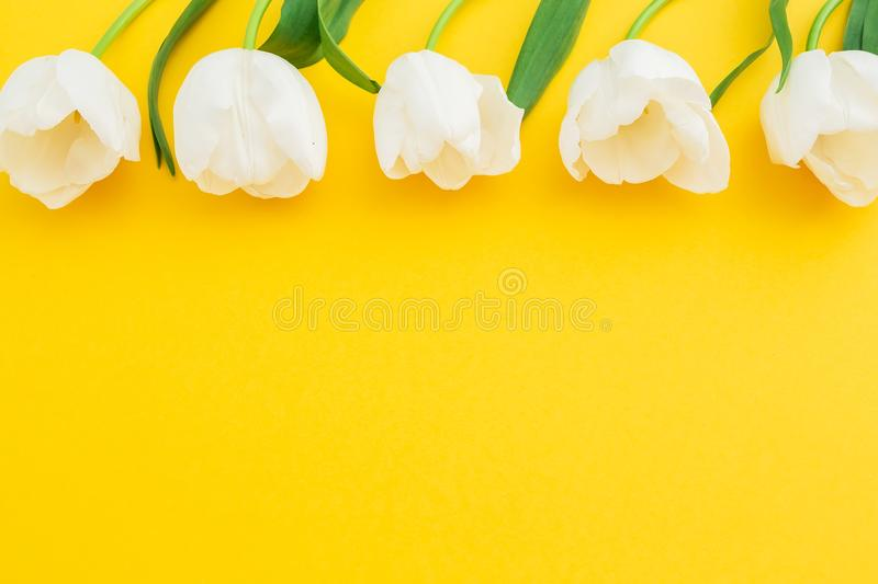 White tulips flowers on yellow background. Flat lay, top view. Floral frame background. stock photography