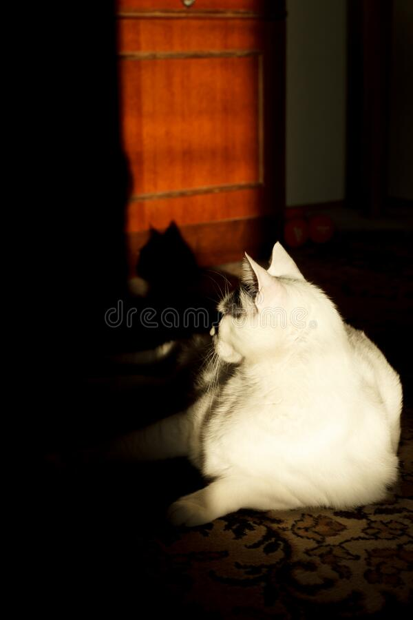 White cat in sunlight in old flat royalty free stock photo