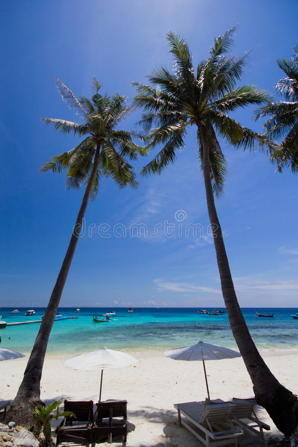 White Umbrella And Chairs Under Coconut Tree Royalty Free Stock Photo