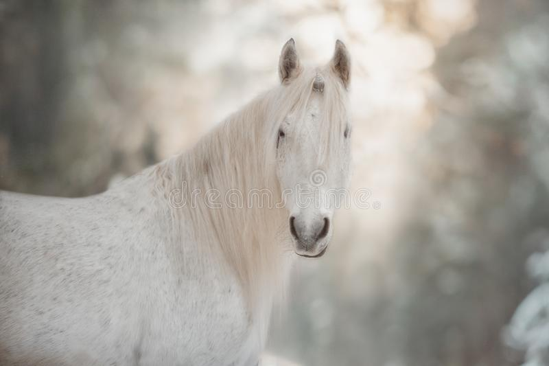White  unicorn in the winter forest. stock photo