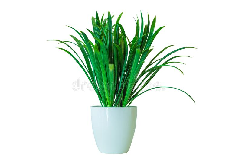 White vase artificial green grass realistic for decoration creative design office home working restuarant royalty free stock photo