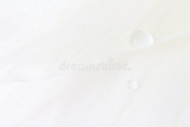 Download White Water Drops stock photo. Image of petal, horizontal - 13329292