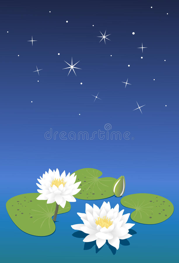 Download White Water Lilies. Stock Photos - Image: 20454133