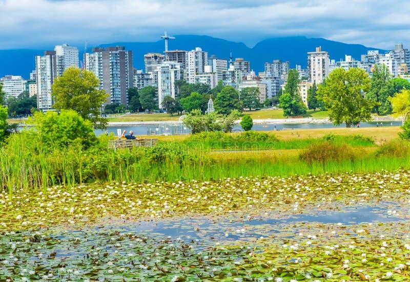 White Water Lilies Pond Vanier Park Vancouver British Columbia C. Anada Pacific Northwest stock photography