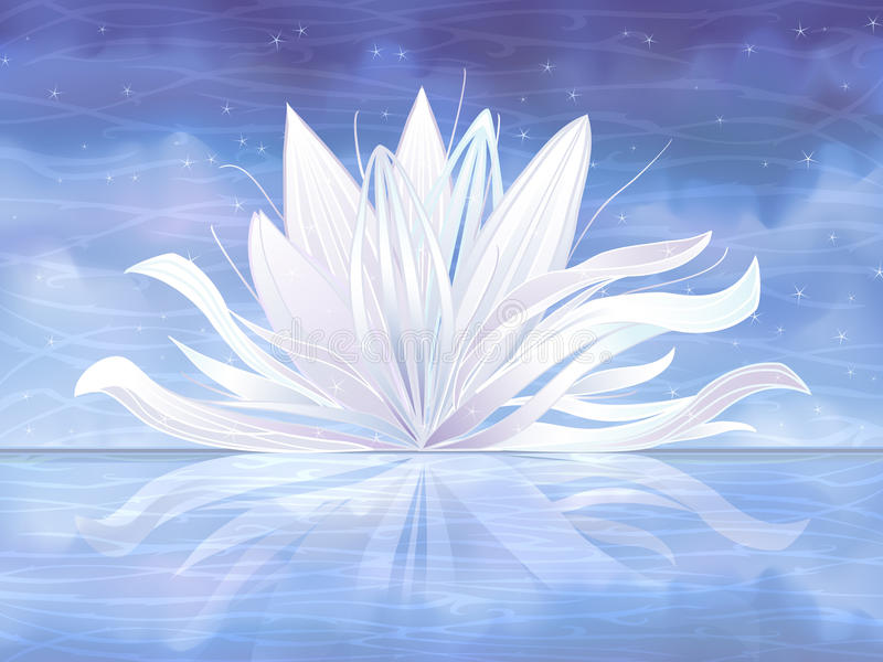 Download White water lily stock vector. Image of grace, pale, beauty - 12106931