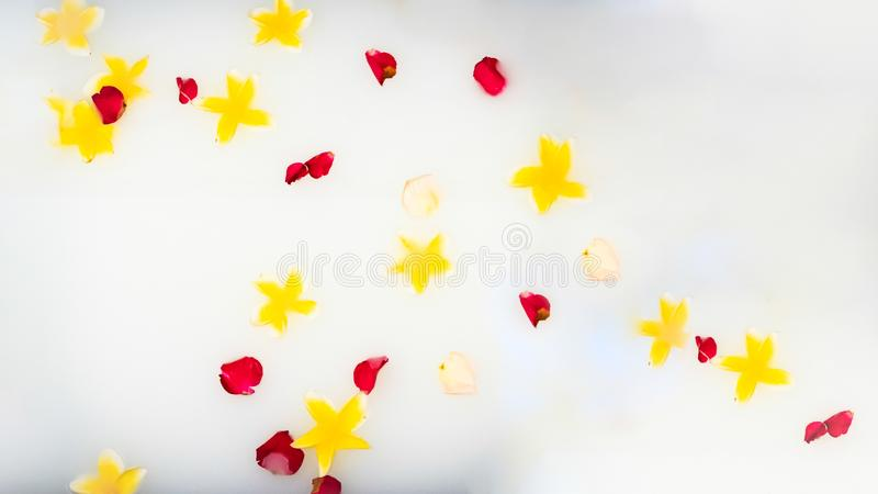 White water with tropical flowers and roses petals. Luxury spa, organic skin treatment concept. Background royalty free stock image
