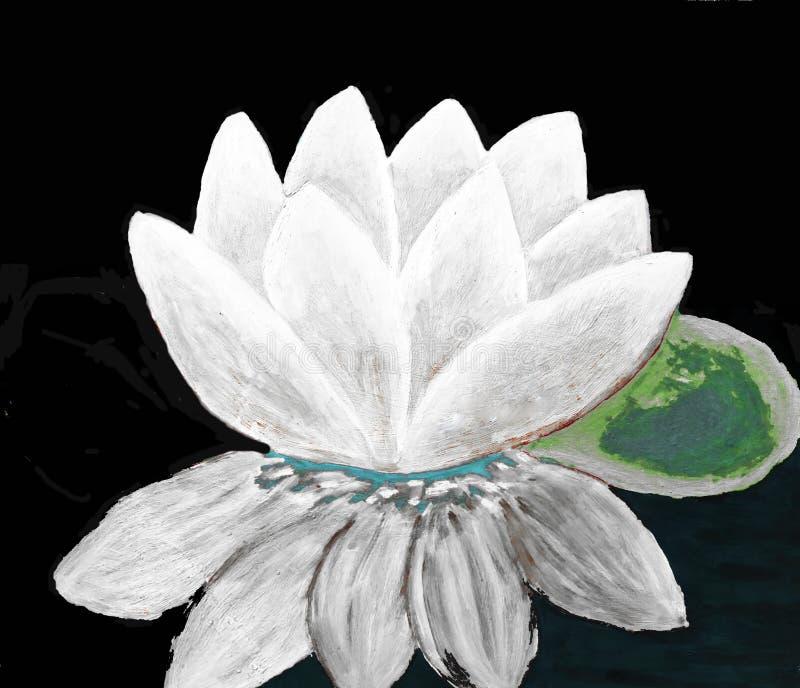 White waterlily on black royalty free illustration