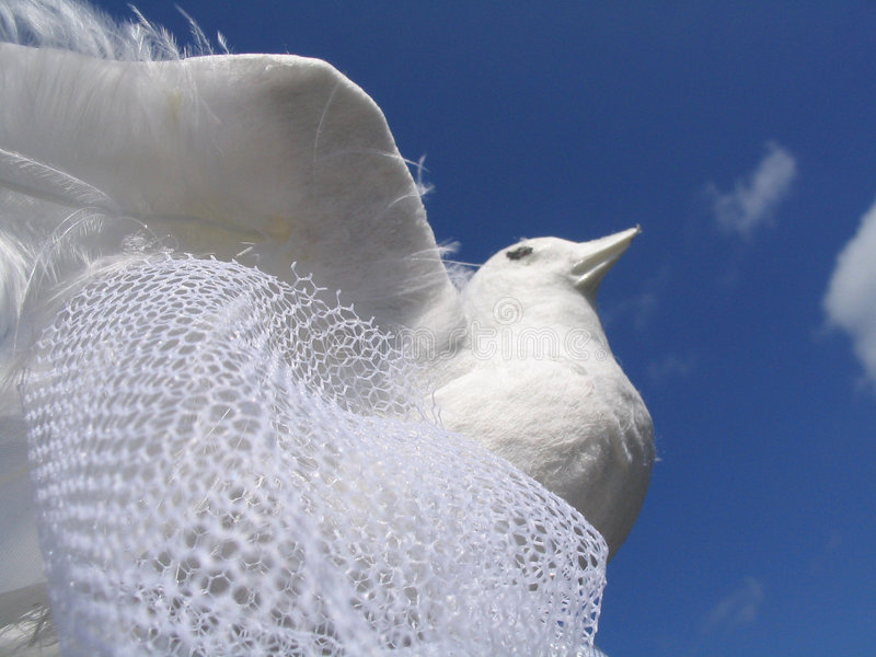 White Wedding Dove stock photos