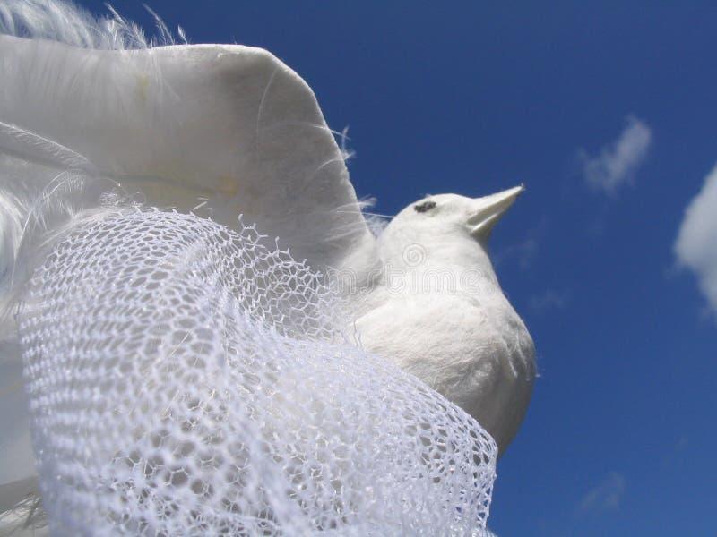 White Wedding Dove. Against blue sky stock photos