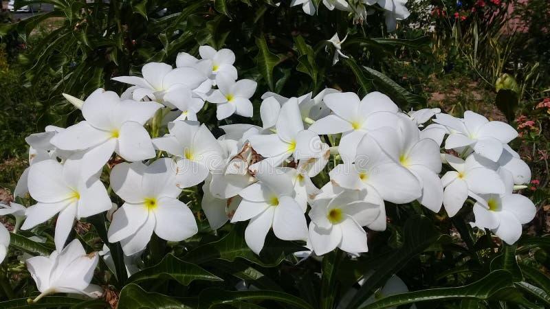 Flower. White whiteflower beautiful nature royalty free stock photos