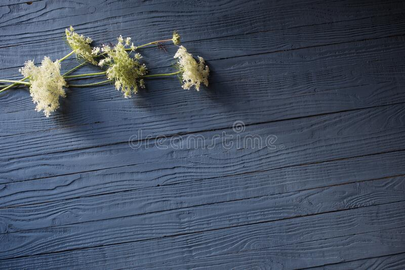 white flowers on blue wooden background stock photos