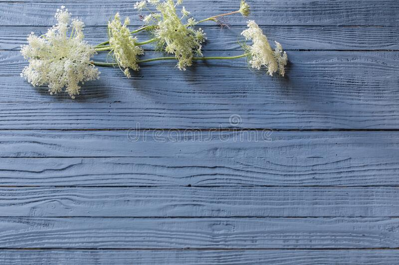 white flowers on blue wooden background royalty free stock photography