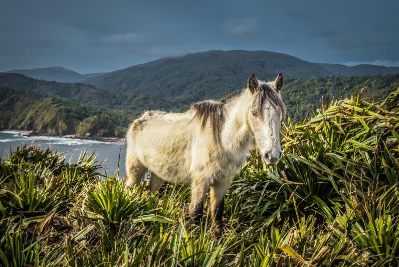 White wild horse stock photo