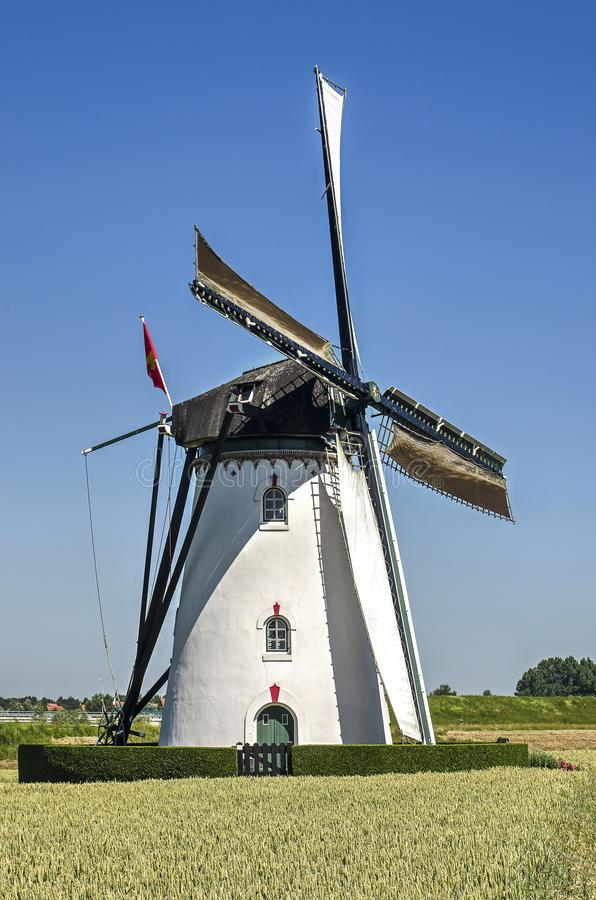 White windmill under a blue sky. Nieuw- en Sint Joosland, The Netherlands, June 29, 2019: the traditional white platered corn mill surrounded by a wheat field on royalty free stock photo