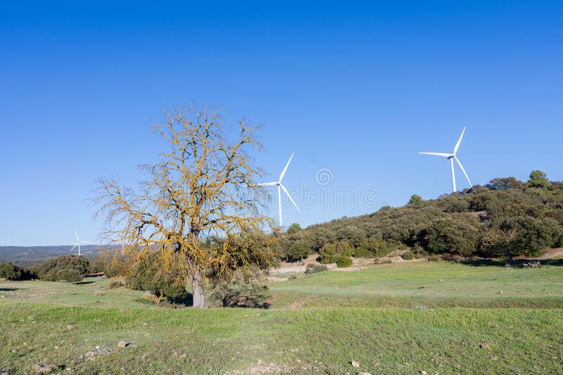 White windmills on natural pine and mountain landscape and clear blue sky. Clean and renewable energy stock photo