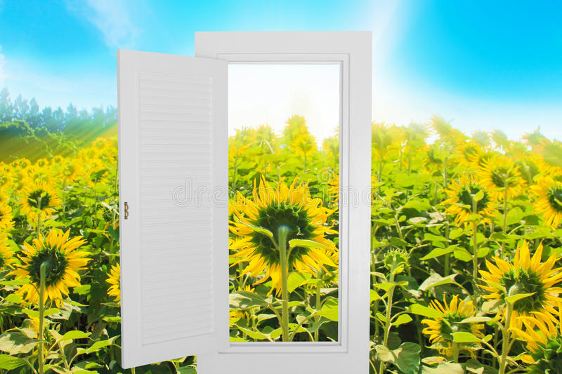 White window open frame with sunflower farm background. royalty free stock images