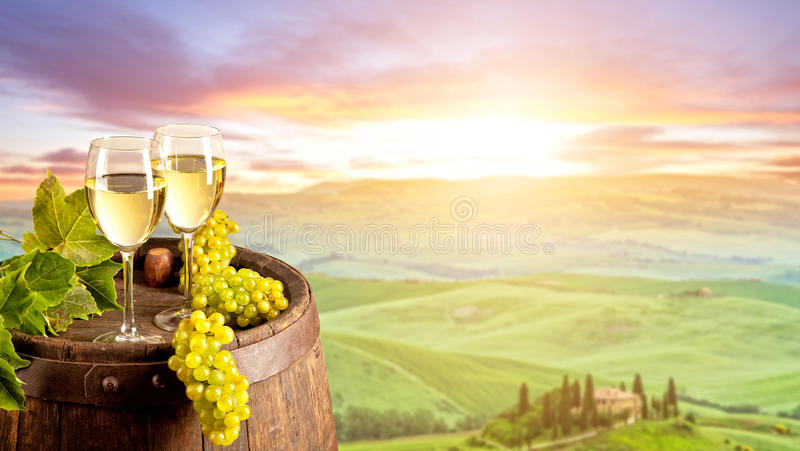 White wine with barrel on vineyard in Italy. White wine with wooden barrel on vineyard in Tuscany, Italy stock images