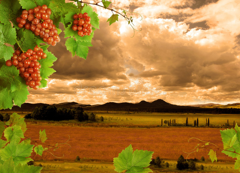 White wine and sunset landscape stock images