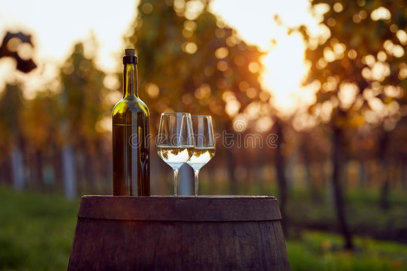White wine in two glasses on a wooden barrel at sunset. stock photos