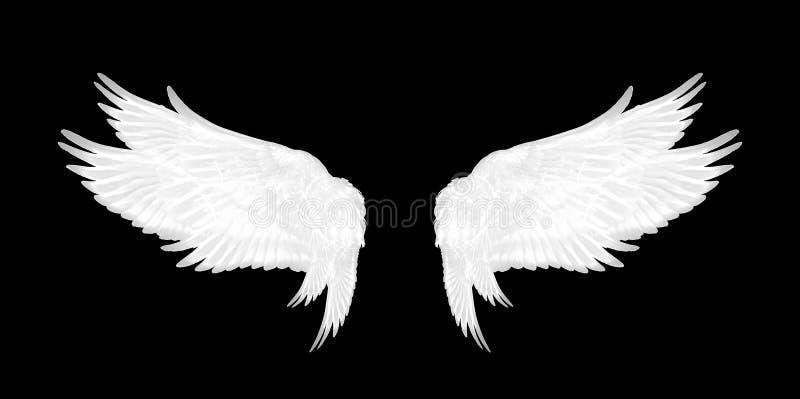 White wings of bird on black background stock photos