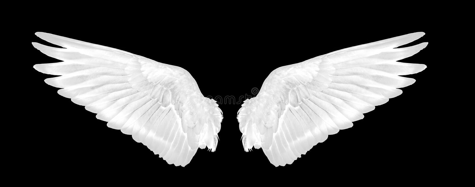 White wings of bird on black background royalty free stock photo