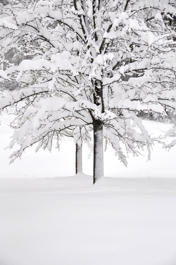 Download White winter stock photo. Image of beautiful, wooded - 14165316