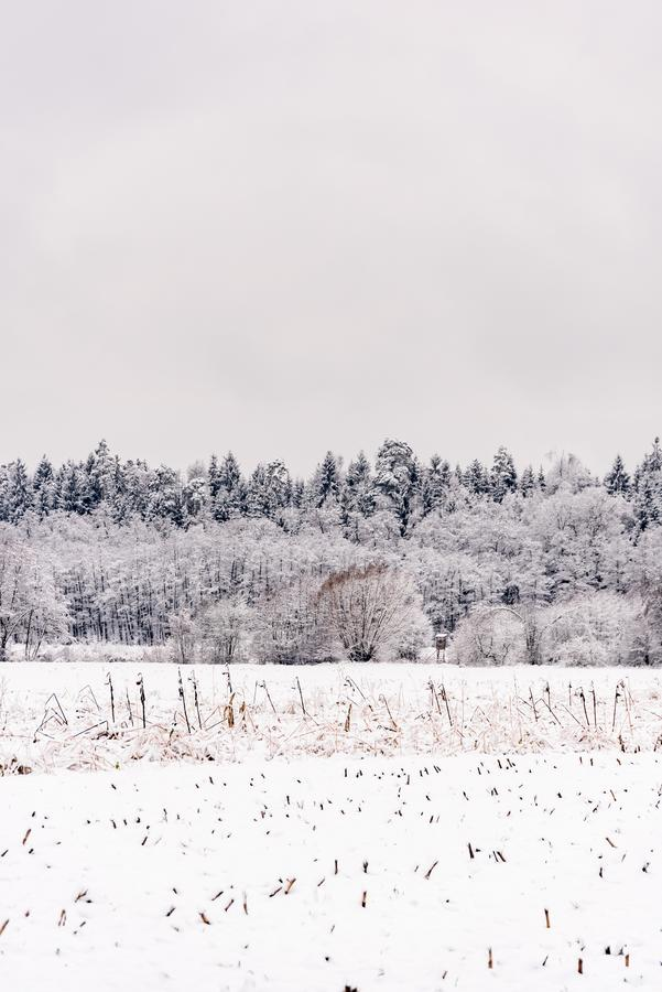 White winter landscape forest and fields. Countryside stock images