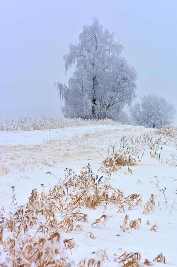 Mysterious white winter road.Foggy day Lithuania stock images