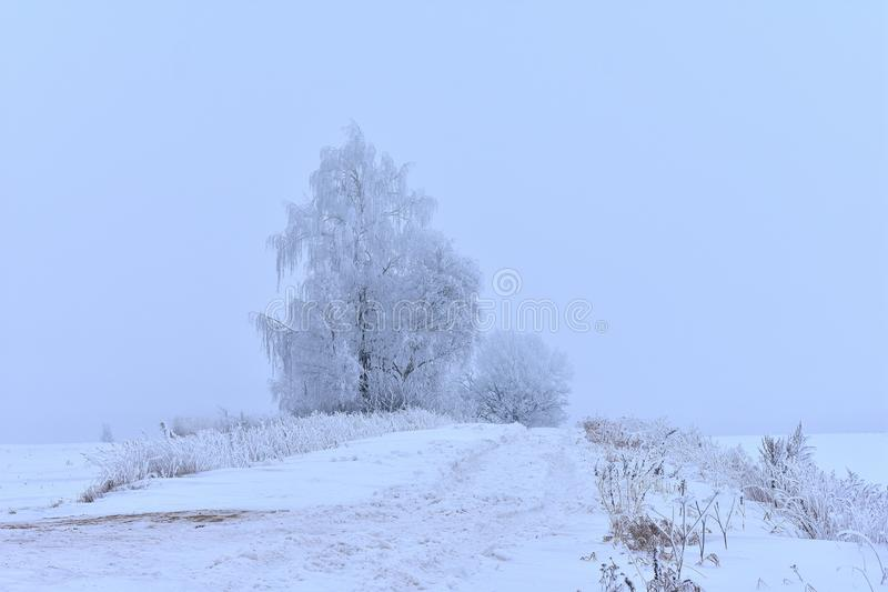 Mysterious white winter road.Foggy day Lithuania royalty free stock images