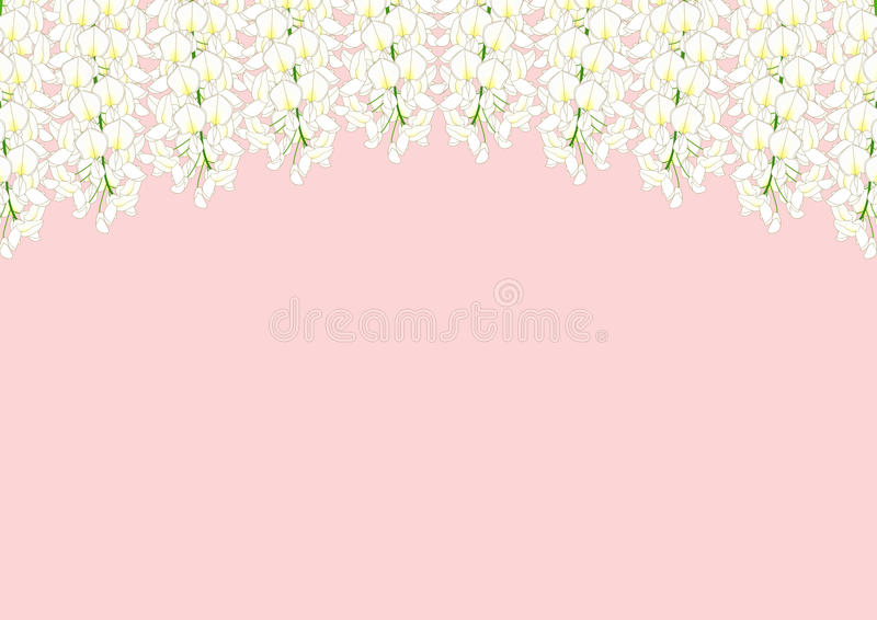 White Wisteria isolated on Pink Background with copy space. Vector Illustration.  stock illustration