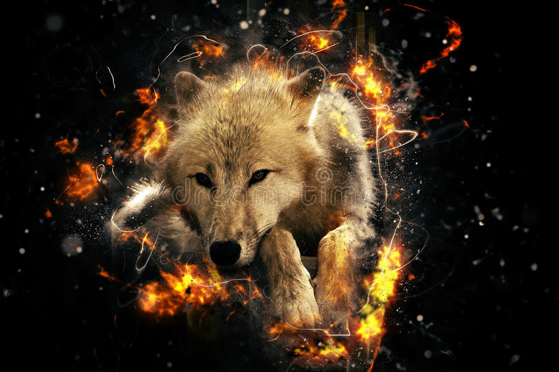 White wolf. Lies calmly and eases, fire illustration vector illustration
