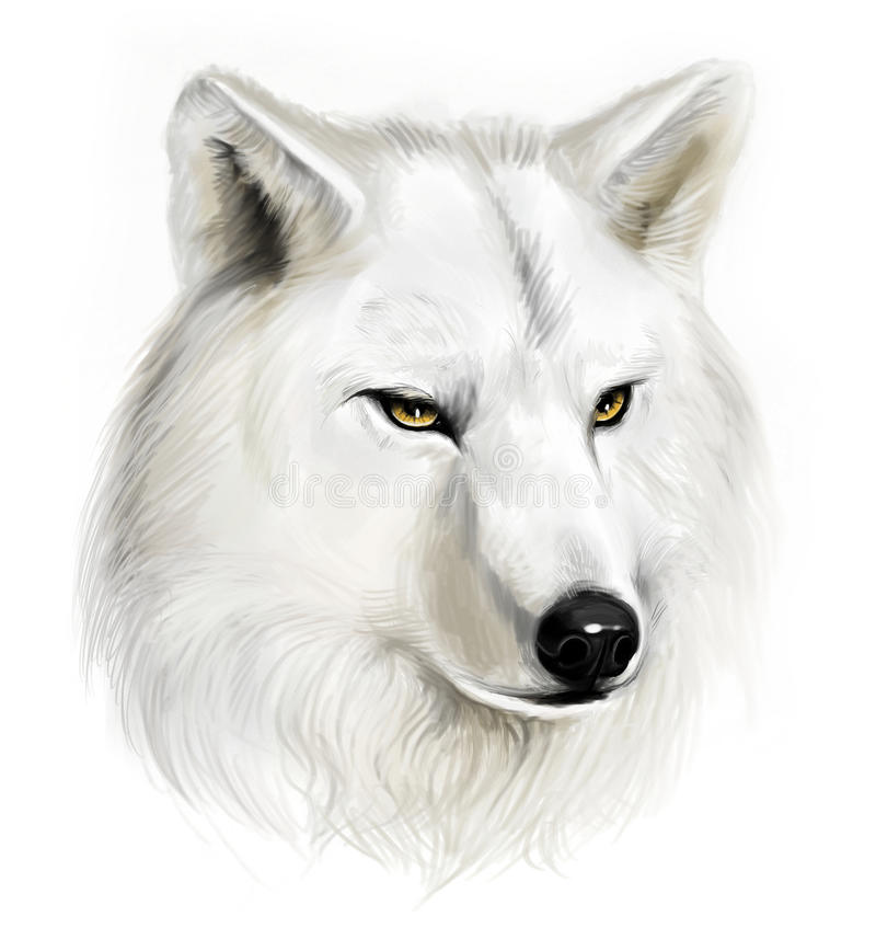 White wolf. Portrait of realistic white wolf on the white background stock illustration