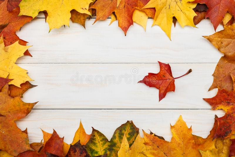 White wooden background with group of autumn maple leaves. View of white wooden background with group of autumn maple leaves stock photography
