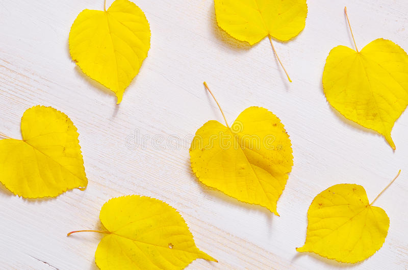 White wooden background with nice yellow leafs stock photo