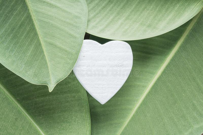 White wooden heart on ficus leaves stock images