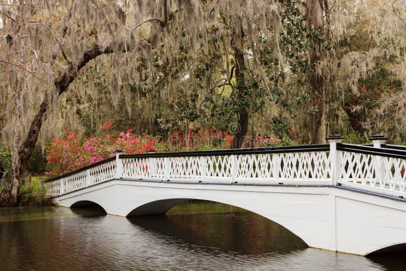Ornamental White Bridge Magnolia Plantation SC royalty free stock photo