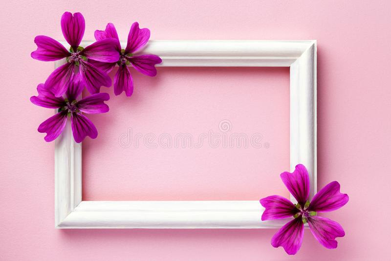 White wooden photo frame with purple flowers on pink paper background. With copy space. Floral greeting card. flat lay royalty free stock photography
