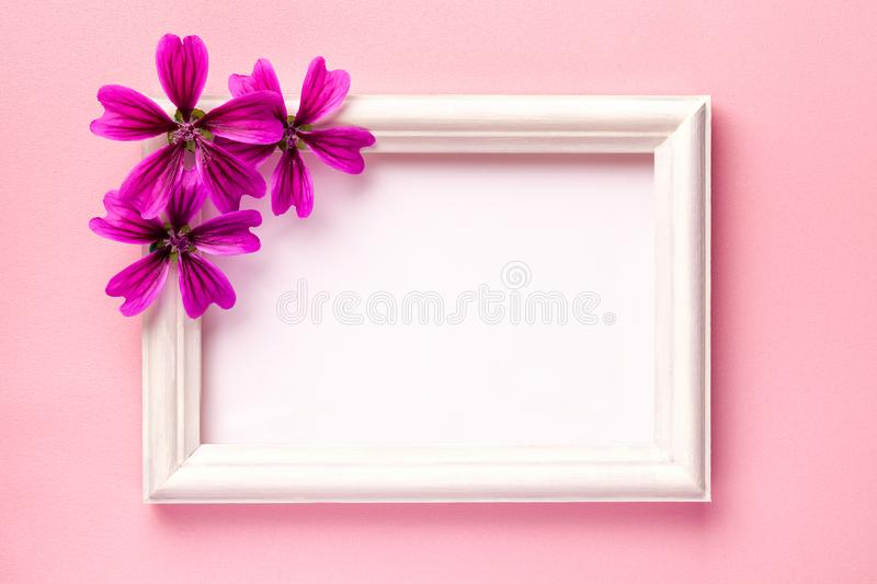 White wooden photo frame with purple flowers on pink paper background. With copy space. Floral greeting card. flat lay royalty free stock image