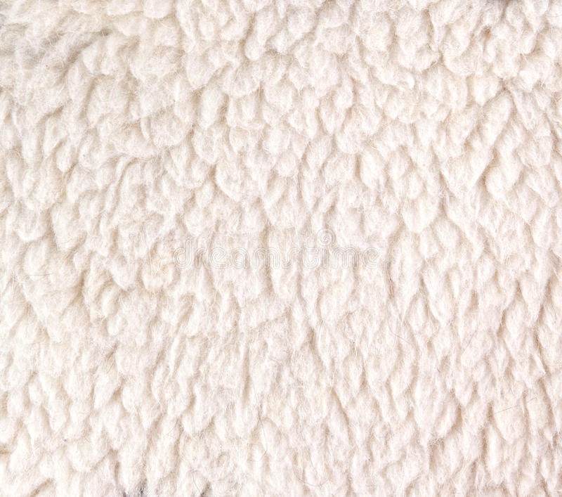 White Woolly Sheep Fleece For Background Stock Image