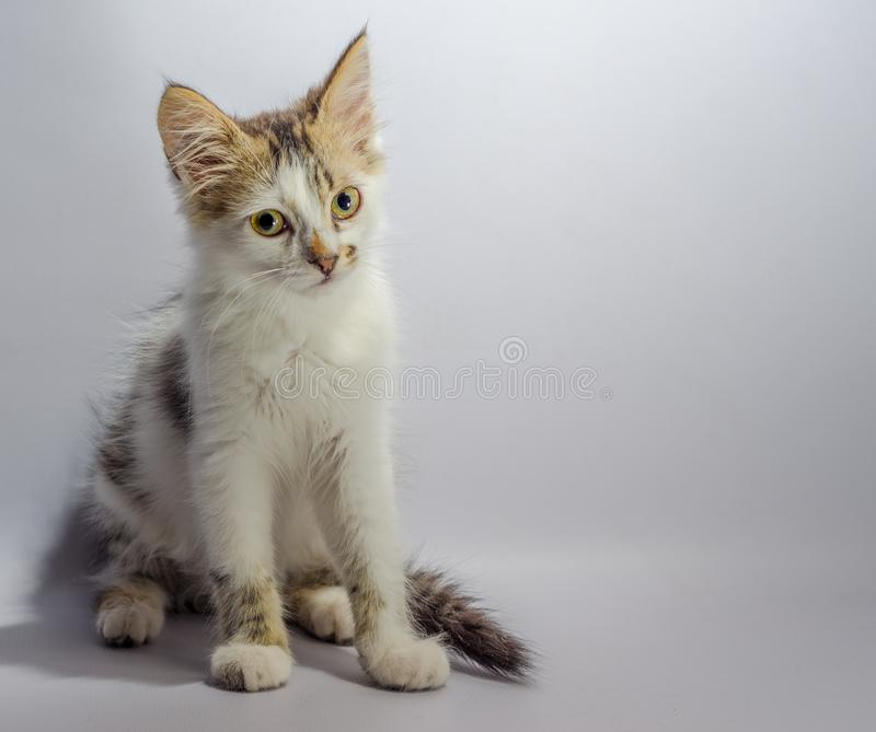 White yellow-eyed spotted kitten sits on a light background look stock photography