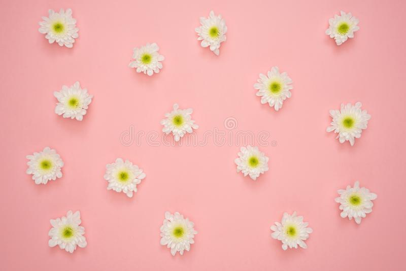 White and Yellow Flower on Pink Wall stock images