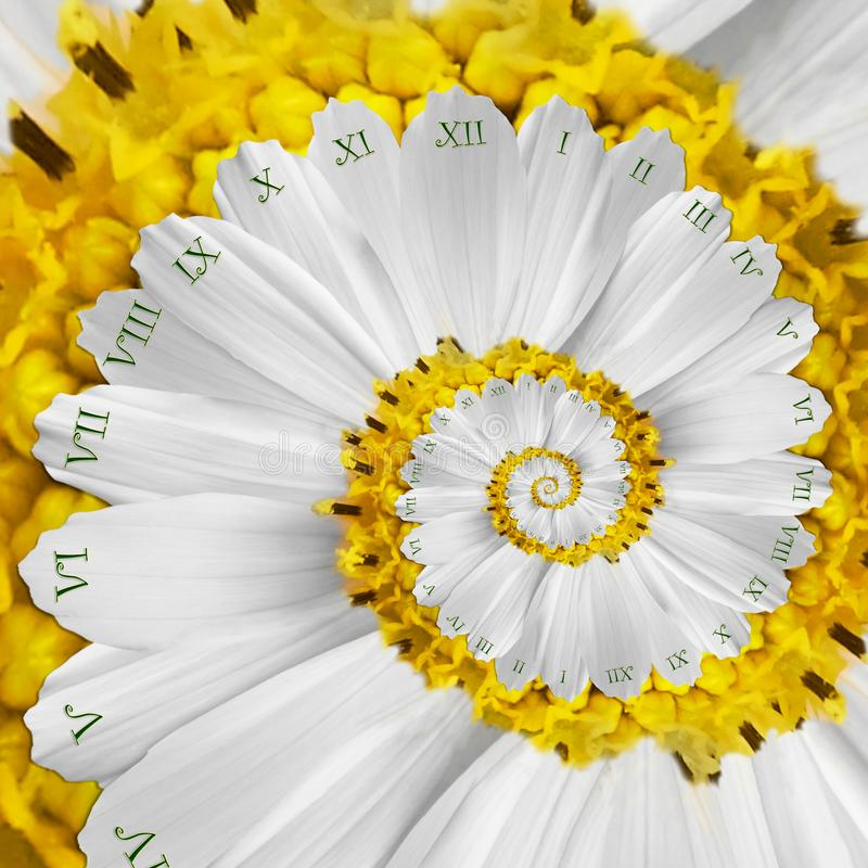 White yellow flower surreal clock abstract fractal spiral. Floral watch clock unusual abstract texture fractal background. White yellow flower surreal clock stock photo
