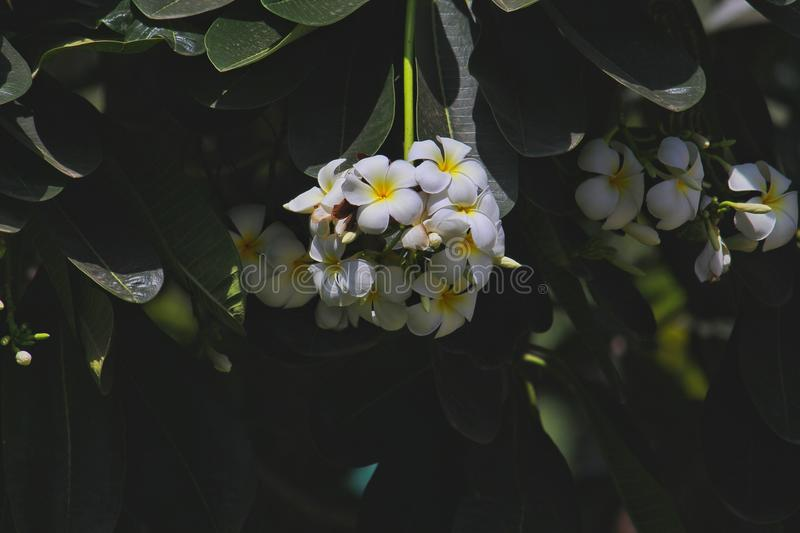 White and Yellow Flowers Photography stock image