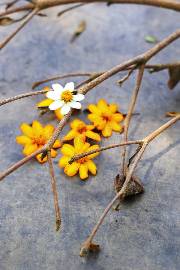 White With Yellow Flowers And Twigs. Stock Photo
